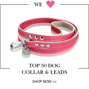 top 50 collars and leads