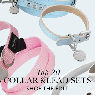 top 20 collars and leads