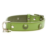 Moet Dog Collar in Lime