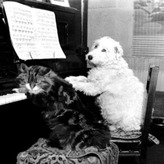Dog And Piano Card